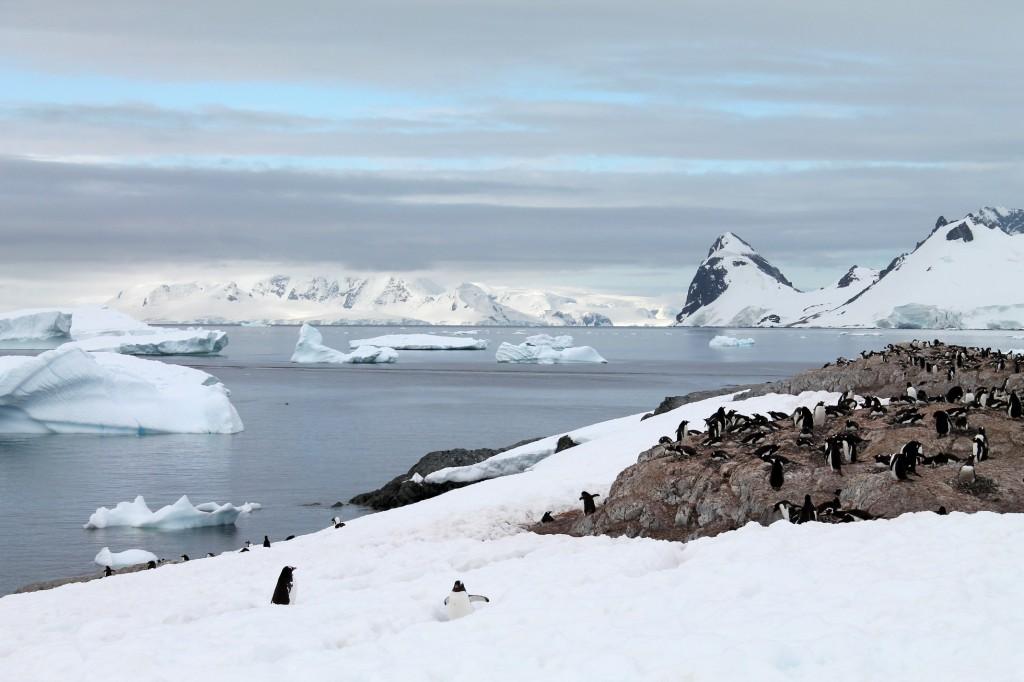 penguin highway cuverville